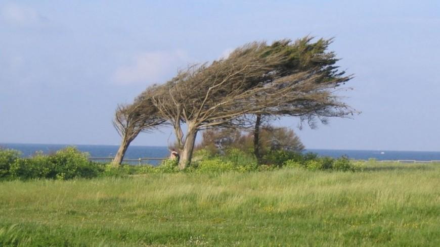 Le vent souffle fort dans la région