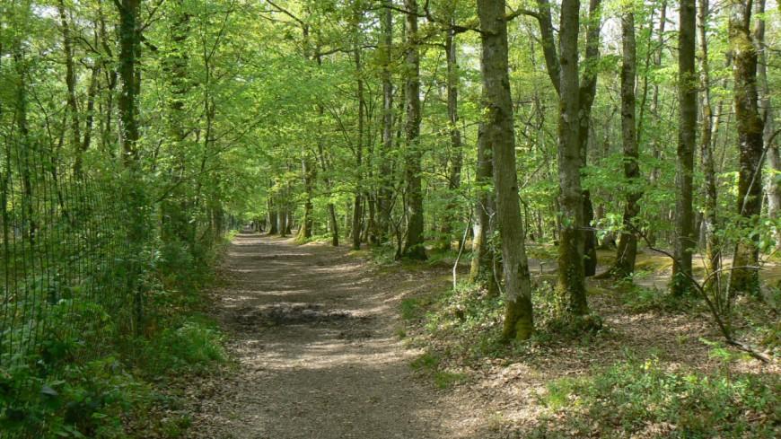 Acheter une forêt pour préserver la nature