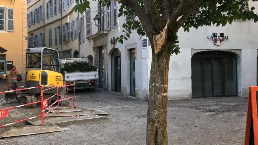 Des arbres dégradés sur la place métropole à Chambéry