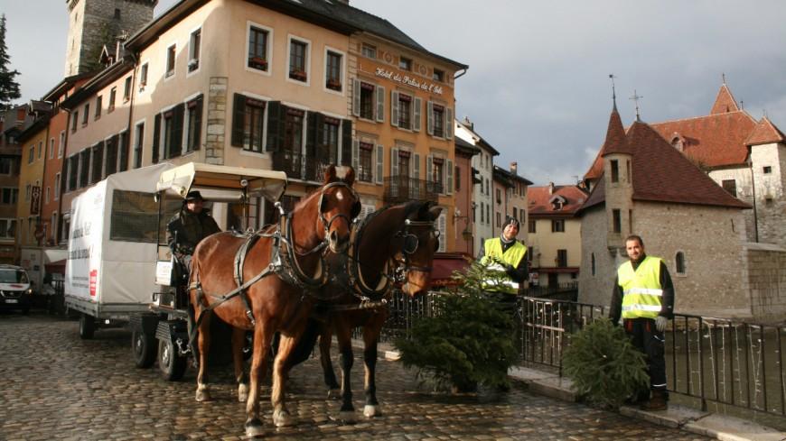 Annecy : des chevaux pour ramasser les sapins