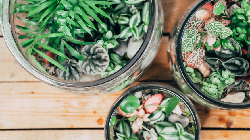 Un nouvel atelier végétal à Annecy