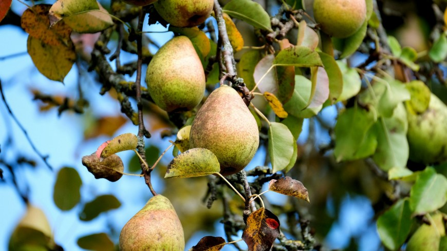 La vague de froid inquiète les producteurs de fruits