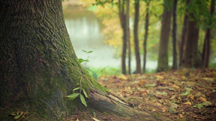 Oyonnax rugby va planter des arbres
