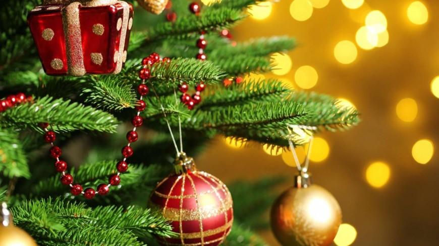 Sallanches à la recherche de son sapin de Noël