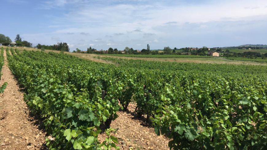 Savoie : des balades en segway dans les vignobles